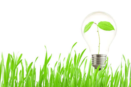 growing inside: Green eco energy concept, plant growing inside the light bulb
