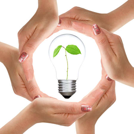 Hands and light bulb with plant inside  Isolated on white background photo
