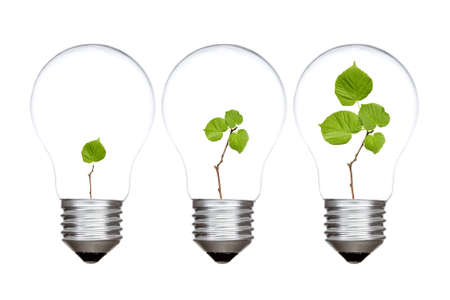 Three light bulbs with green plants inside  Isolated on white background photo
