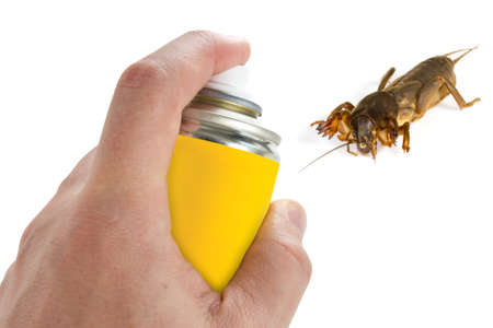 Pest control, spraying insecticide on the  mole cricket