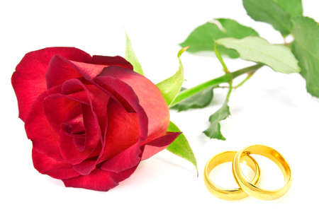 Red rose and wedding rings on the white background photo
