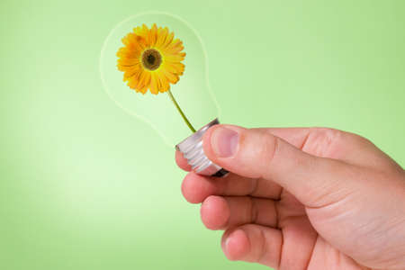 Hand holding light bulb with yellow flower inside photo