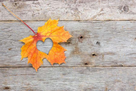 Fall in love photo metaphor. Maple leaf with heart shape on the wooden background photo