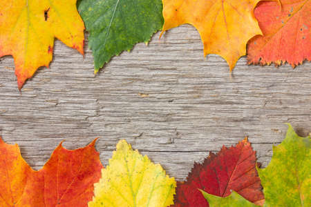 Background with wooden planks and colorful fall leaves photo