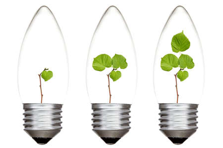 Light bulbs with green plants inside. Isolated on white background photo