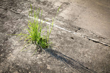 Green grass growing through crack in concrete photo