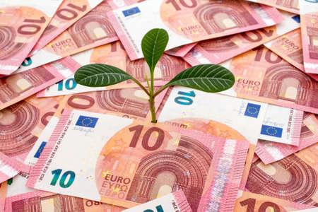 subsidy: Tree growing from many ten euro bills Stock Photo