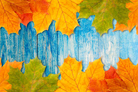 leaves frame: Colorful autumn leaves frame with blue wooden background