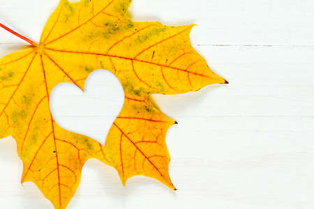 leaf shape: Maple leaf with heart shape on the white wooden background