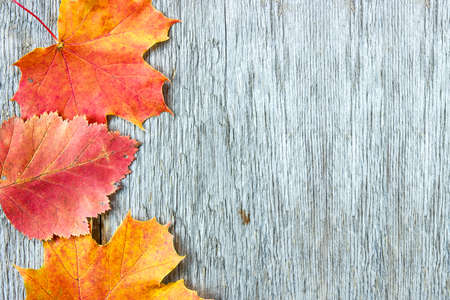 fall colors: Old wooden background with three autumnal leaves
