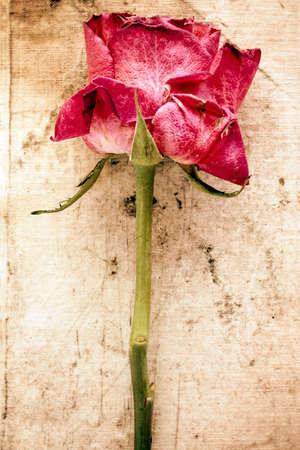 arreglo floral: Viejo se levantó en el fondo del lienzo sucio. Imagen de estilo vintage