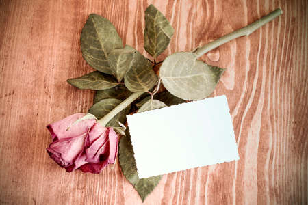 faded: Old rose and blank greeting card over wooden table. Top view with copy space Stock Photo