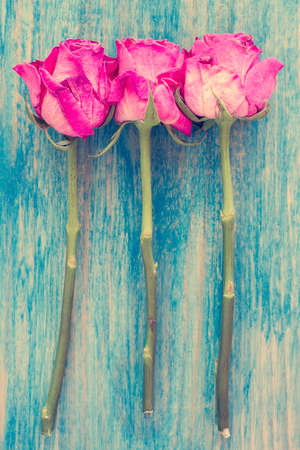 floral decoration: Old roses on blue painted wooden table