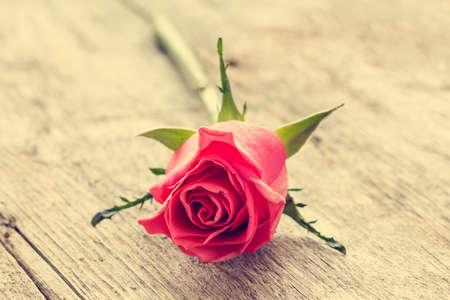pink vintage background: Single pink rose lying on the wooden background. Vintage filter.