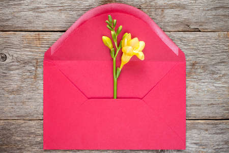 mothersday: Feesia flower in red envelope,top view on wooden background