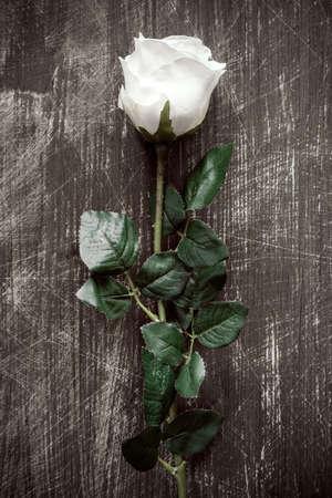 rosas blancas: blanca artificial solo se levantó en el fondo de madera Foto de archivo
