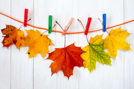 clothespegs: Autumnal maple leaves hanging on rope with clothes-pegs Stock Photo