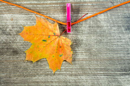 clothespeg: Single maple dry leaf hanging on rope with clothes-peg Stock Photo