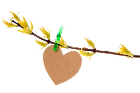 Paper heart  hanging on the spring branch. Isolated on white background Stock Photo