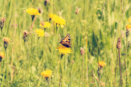 Butterfly on a summer meadow in the sunshine