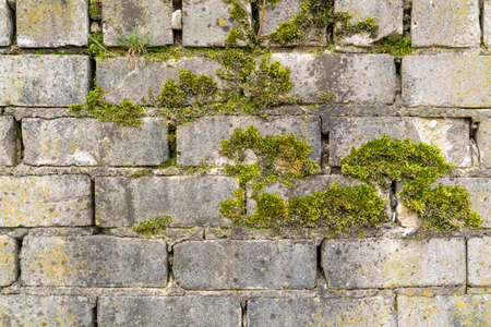 Brick wall with moss growing out of it