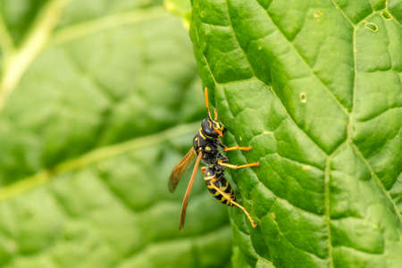 Wasp on the green leaf in nature
