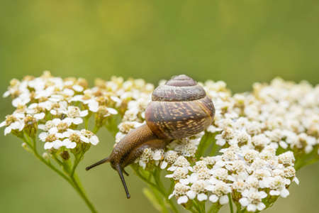 Little snail sitting on the white plant and looking down