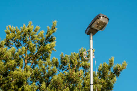 Street lamp on a steel pole located near the tree top branches Imagens