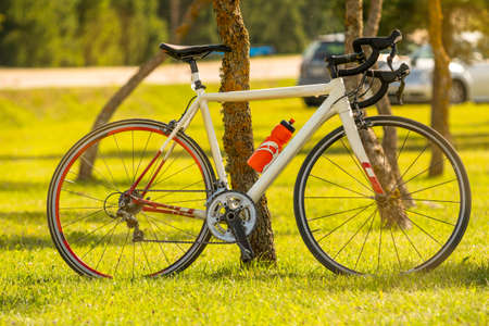 Sports bicycle parked near a tree in the open air. Healthy life concept.