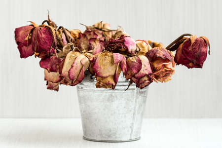 A bouquet of dead withered roses in old shabby aluminium bucket