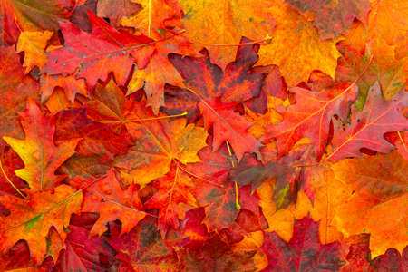 Background of colored autumn leaves. Autumn Leaves Background. Archivio Fotografico
