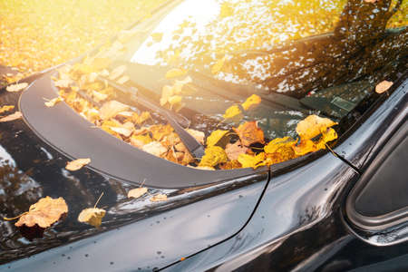 Fall season and transport concept - close up of car wiper with autumn  leaves on windshield