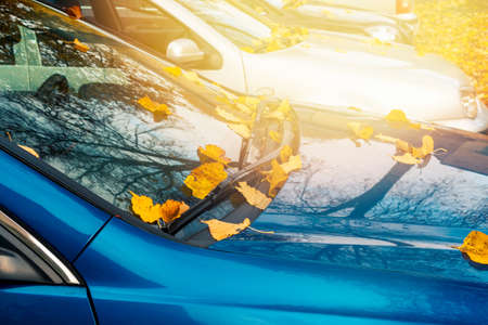 Season and transport concept - close up of car wiper with autumn  leaves on windshield 免版税图像