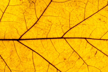 Yellow leaf texture, close-up. Abstract nature background.
