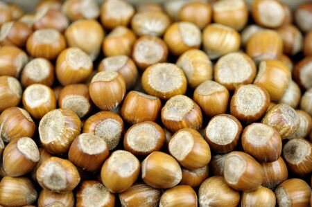 Hazelnuts also called cob or filbert nuts. Stock Photo