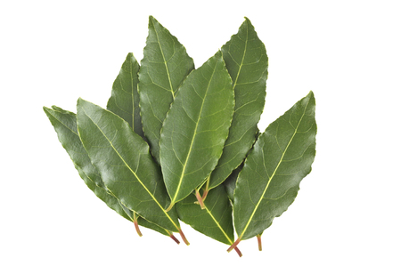 Collection of fresh picked Bay leaves, from the Laurus Nobilis or Bay Laurel tree, for use as a culinary ingredient to flavour food.