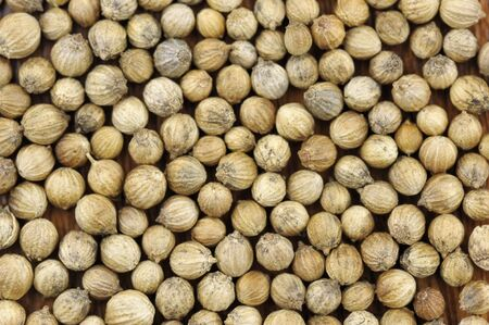 coriandrum sativum: Coriander seeds, coriandrum sativum, also called pak chee, cilantro and chinese parsley.
