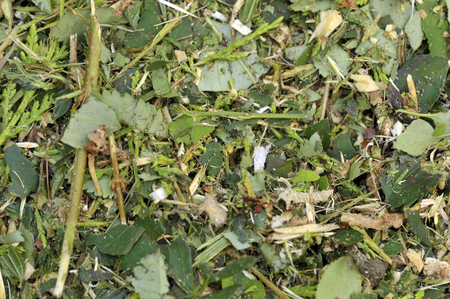 Shredded woody brown and green garden waste for use as woodchips, mulch, or recycled via composting and used as a soil improver. Stock Photo