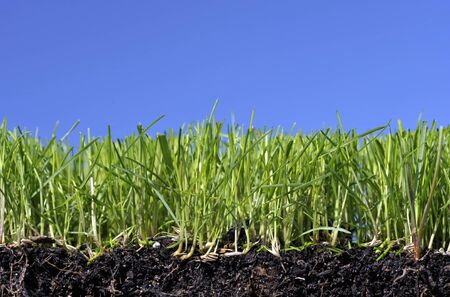 Grass lawn turf with topsoil and root structure against a blue sky background.