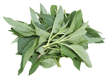 Comfrey leaves, genus symphytum Bocking 14 cultivar of Russian Comfrey also spelt comphrey, harvested and used by organic gardeners in compost, as a mulch and to make natural fertilizers. Leaves are also used in herbal remedies. Isolated on white.