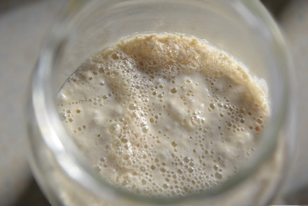 Natural yeast sourdough starter culture used to raise doughs when making sourdough bread.