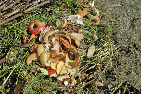Recycling garden and kitchen waste on a compost heap including grass cuttings, carrot tops, bean stalks with both fruit and vegetable peelings.