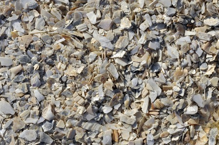 Crushed seashells used as a soil amendment, decorative mulch, soil or pot drainage material in the garden.