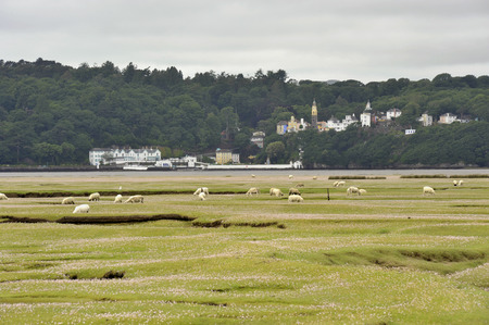 Portmeirion Village on the River Dwyryd Estuary with grazing salt marsh lambs, Gwynedd in North Wales, UK.