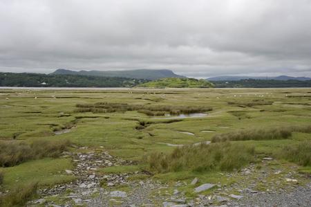 Salt marshes on the River Dwyryd Estuary, Gwynedd in North Wales, UK.