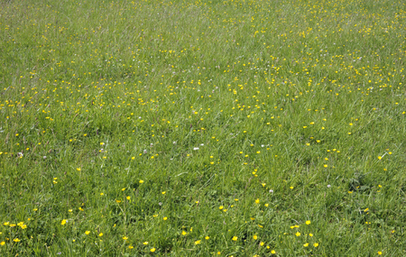 Summer countryside meadow grass field pasture with a natural mixture of wild herbs and flowers.