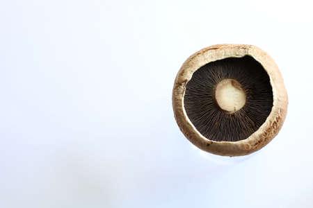 Fresh raw portobello mushrooms isolated on white background Stockfoto