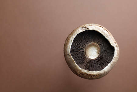 Fresh raw portobello mushrooms isolated on brown background. Top view