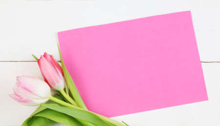 Colored tulips and empty tags on white background