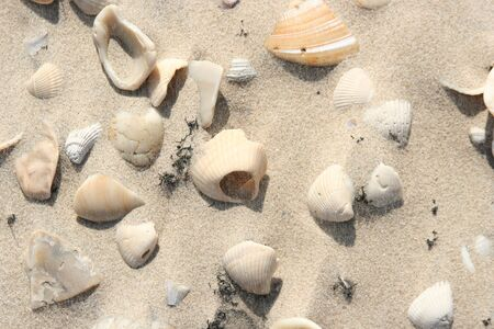 Sea shells on white beach sand Фото со стока